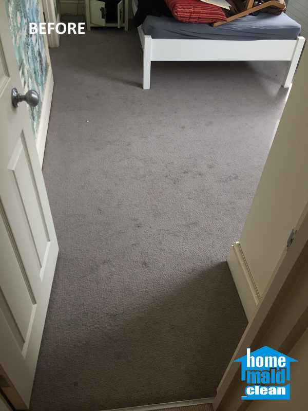 pet hair removal professional carpet cleaning